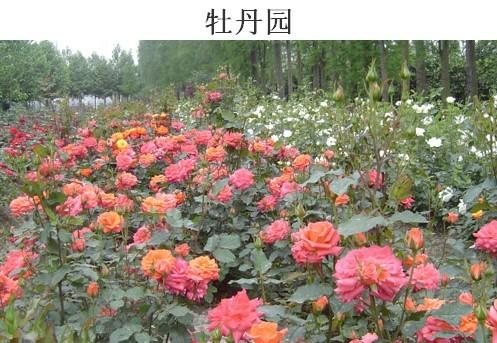 宁波/信息名称: 浙江宁波鄞州天宫庄园农家乐